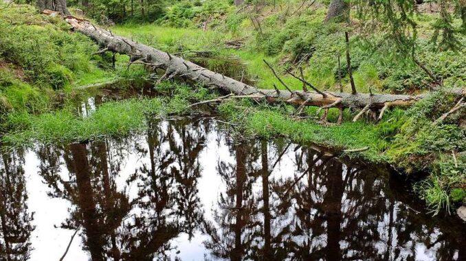 Kladské rašeliny