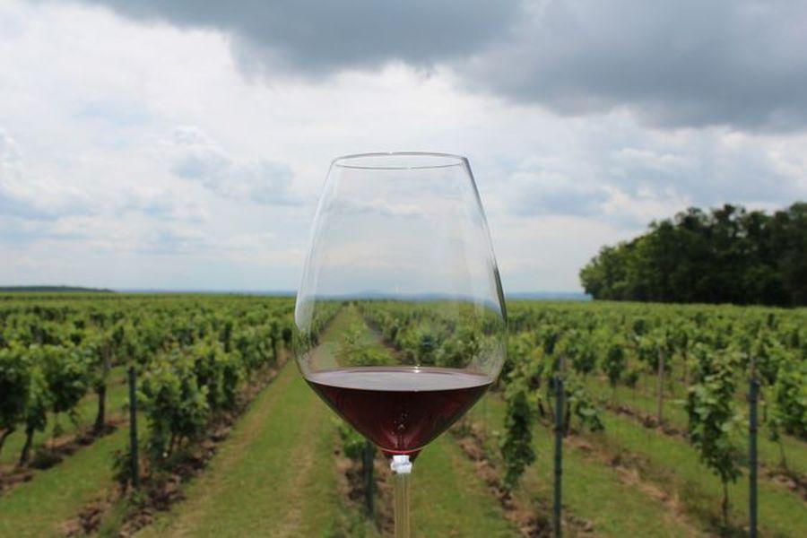 dobré víno v Modrých horách