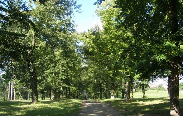 Alej stromů, městský park Hrádek