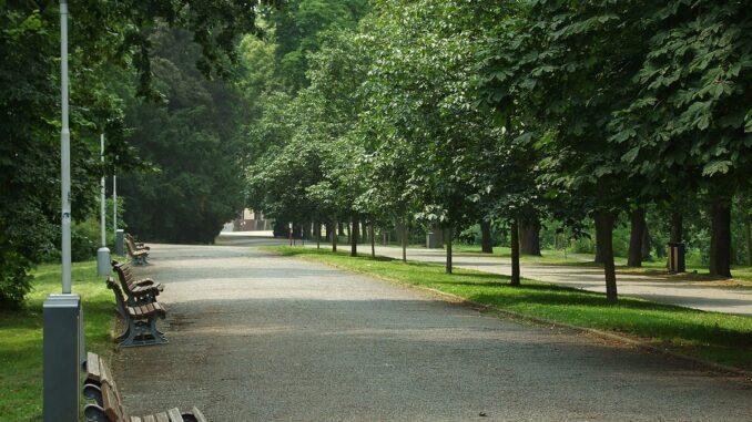 Park, stromy, příroda