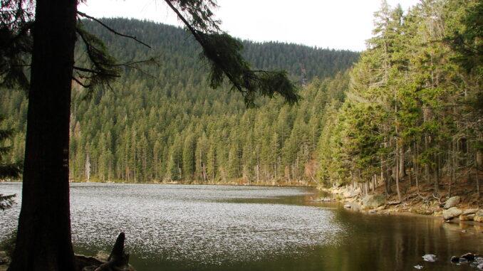 Čertovo jezero a stromy