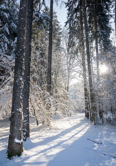 Zasněžená cesta mezi stromy