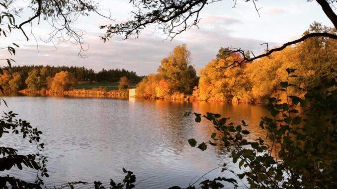 Opatský rybník se stromy