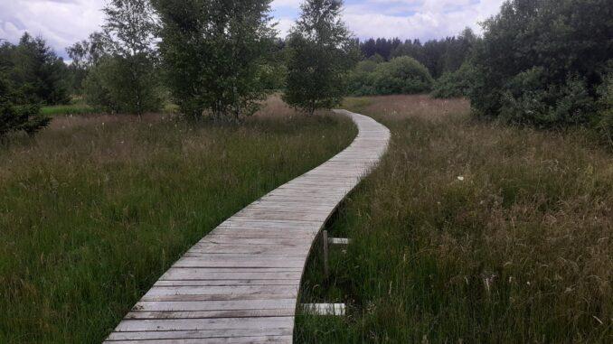 Dřevěný chodník na stezce
