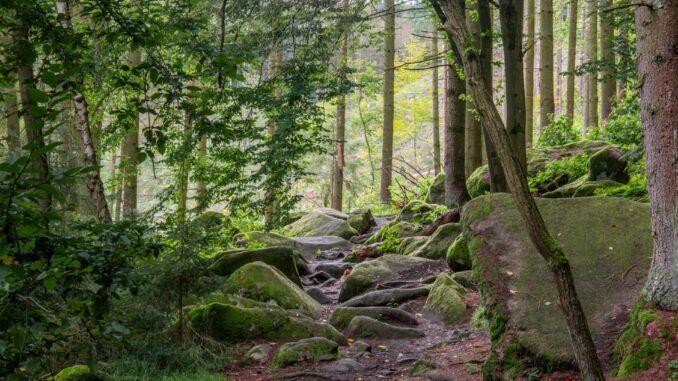 Přírodní rezervace Stvořidla na Vysočině