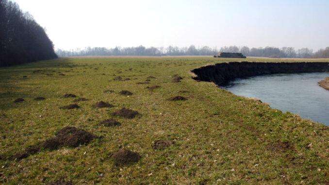 Meandry řeky Odry