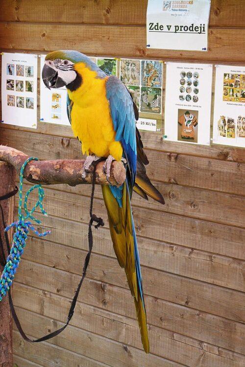 ZOO Tábor a jejich papoušek ara