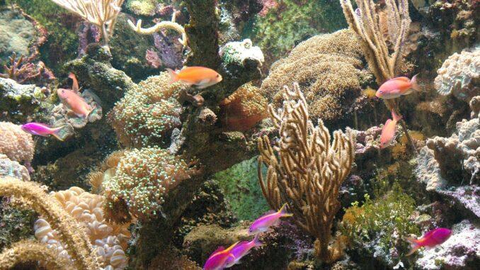 ZOO Olomouc na Svatém kopečku má krásné mořské akvárium