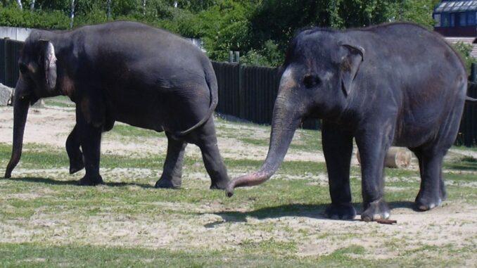 Sloni v ZOO Ústí nad Labem