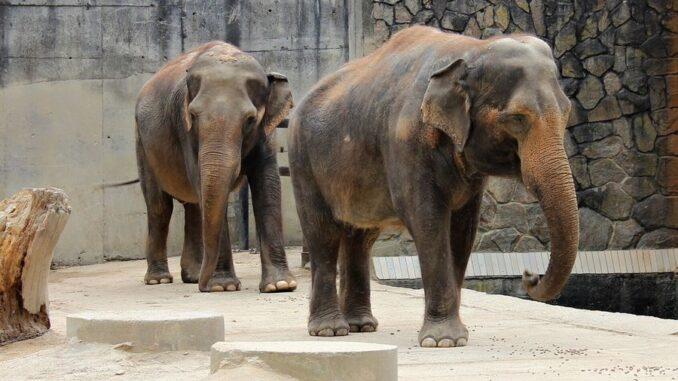 ZOO Liberec a sloni