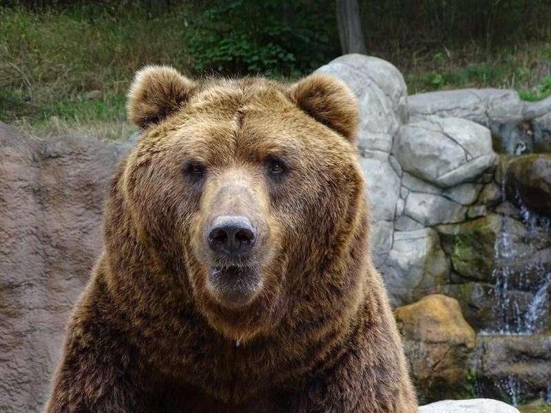 Medvěd v brněnské zoologické zahradě