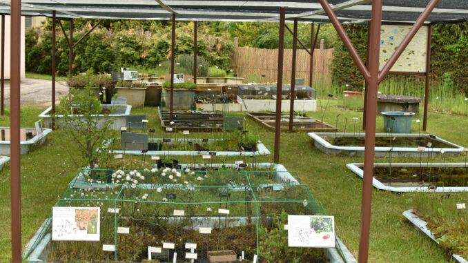 Sbírka vodních a mokřadních rostlin v Třeboni