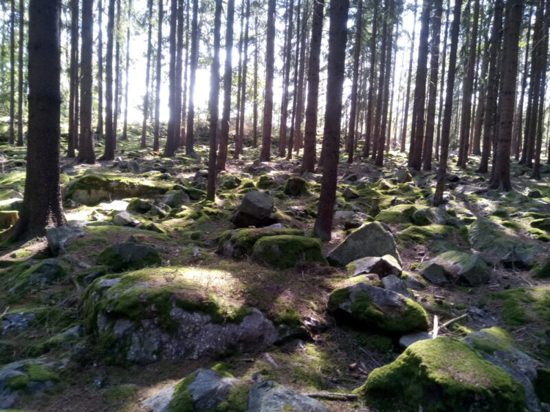 Jindřichova skála - cestou k ní jsou v lese k vidění četná kamenná moře.