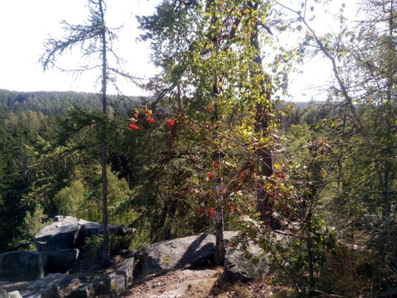 Na Jindřichově skále rostou duby, břízy, borovice, modříny a smrky.