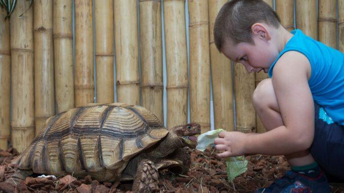 Krmení želv