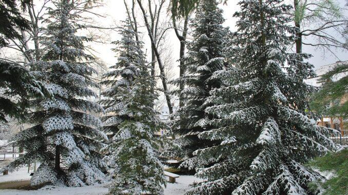 Vnitřní areál v zimě-Arboretum Žampach