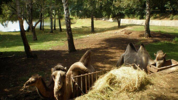 Velbloudi-zoopark Chomutov