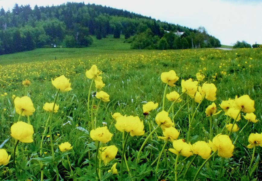 Přírodní rezervace Bukovec