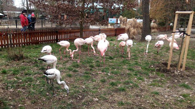 Zoo Hodonín plameňáci