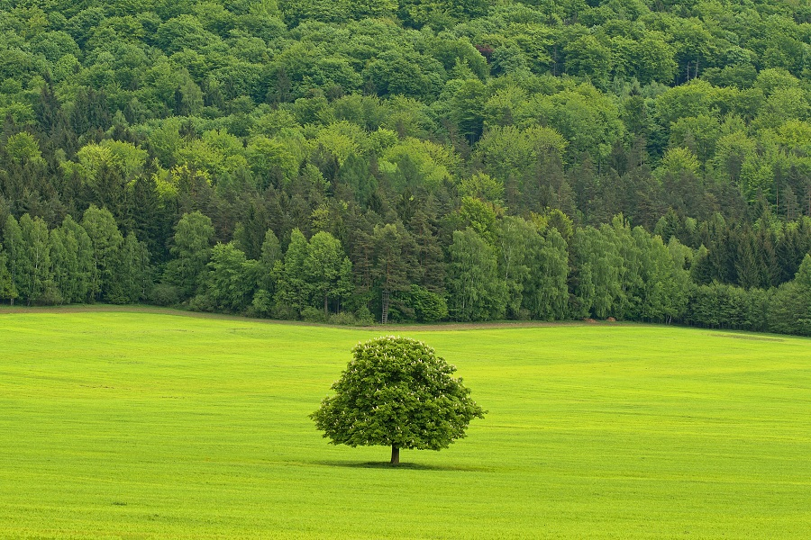 Pod Růžovským vrchem v Národním parku České Švýcarsko. Foto: Mirek Fišera