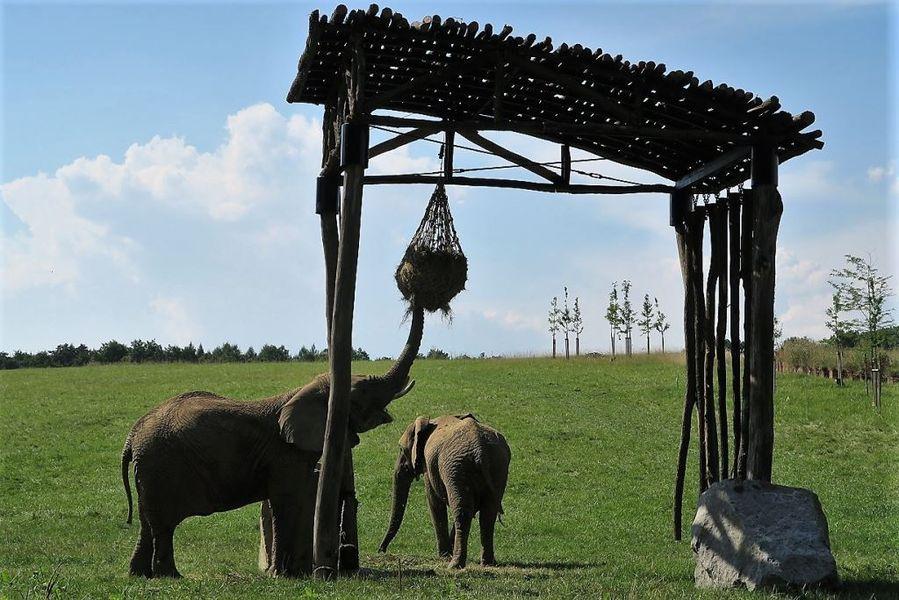 Sloni v Karibuni. Zoologická zahrada Zlín. Zdroj: archiv Zoo Zlín