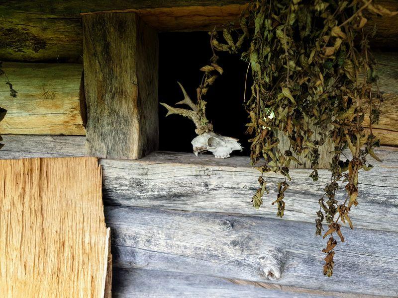 Země Keltů, keltský archeoskanzen u Nasavrk. Foto: Jiří Novotný