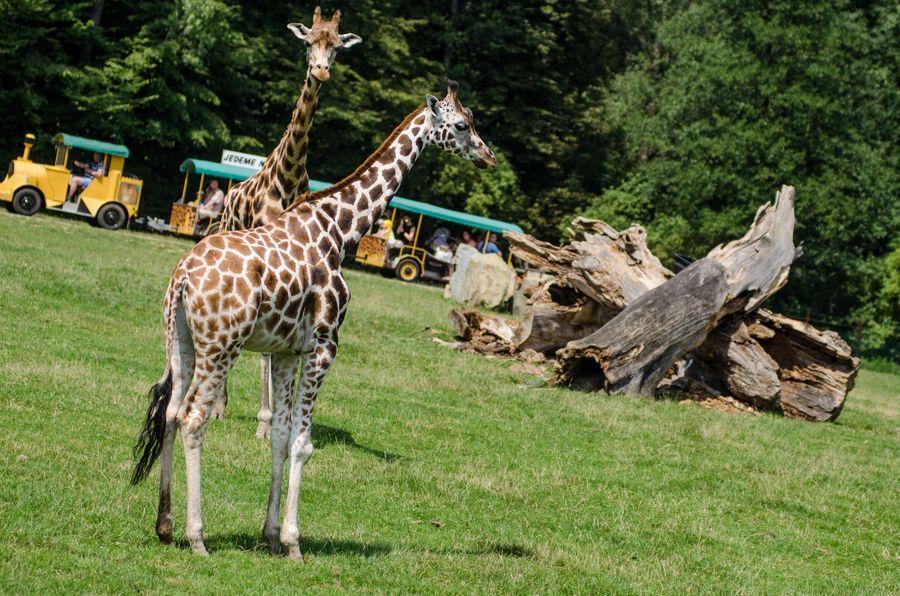 Zoologická zahrada Ostrava. Zdroj: Zoo Ostrava