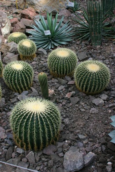 Kaktusy v liberecké botanické zahradě. Zdroj: Pavel.satrapa (CC BY-SA 3.0)