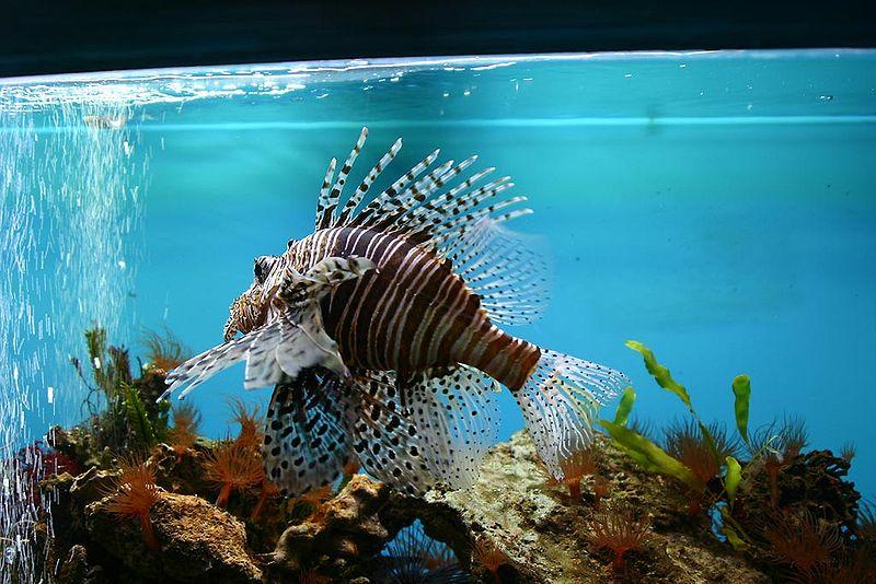 Akvarium liberecké botanické zahrady. Zdroj: Pavel.satrapa (CC BY-SA 3.0)